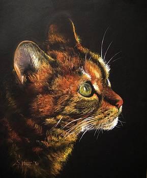 The Cat Series III by Sabina Haas