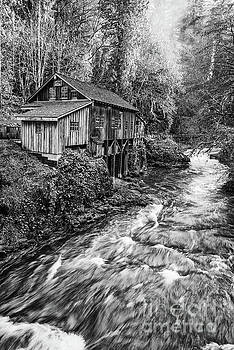 The Cedar Mill and Creek by Jamie Pham