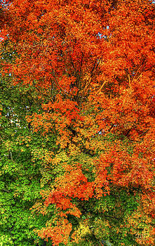 Sam Davis Johnson - The Changing Leaves