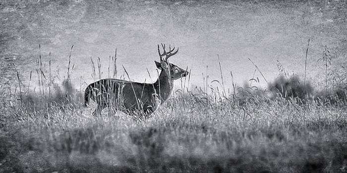 The Chase by Garett Gabriel