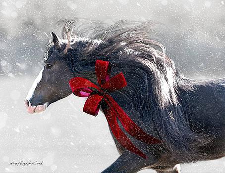 The Christmas Beau by Terry Kirkland Cook