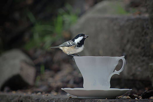 The Coal Tit and The China Cup by Suesy Fulton