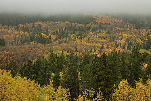 The Color in Colorful Colorado by James BO Insogna