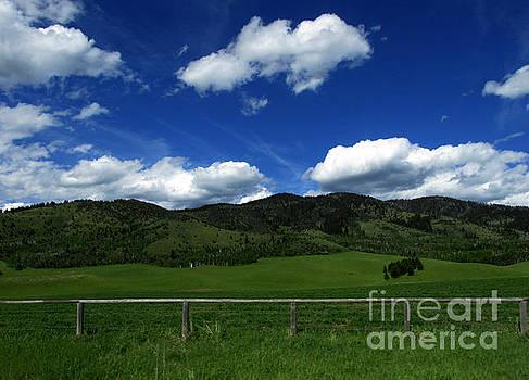 Blue Sky Kind of Day by Janice Westerberg