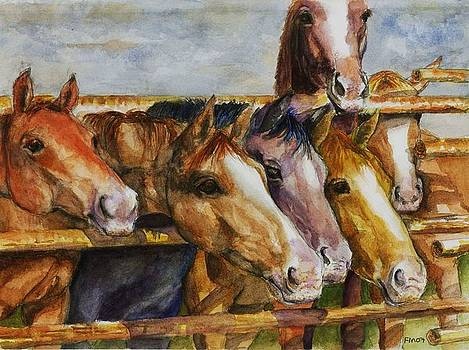 The Colorado Horse Rescue by Frances Marino