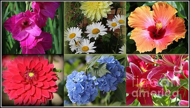 The Colors of Summer - A Collage by Dora Sofia Caputo Photographic Art and Design