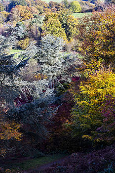 The Colours of Autumn by Andy Myatt