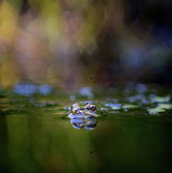 The common frog in water by Libor Vrska