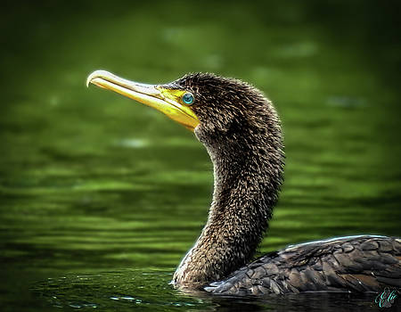 The Cormorant, No. 9 by Elie Wolf