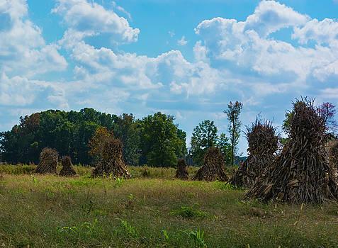 The corn field by Dennis Reagan