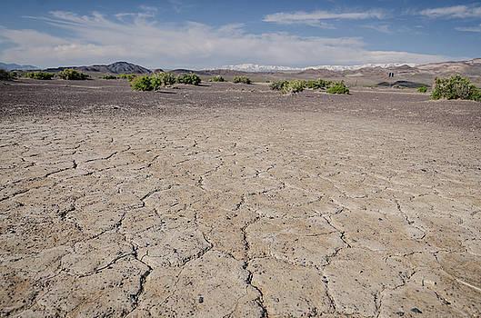 Margaret Pitcher - The Cracked Desert Floor