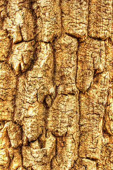 Mother Nature - The Crackling Of Aged Skins