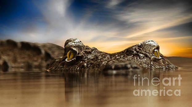 The crocodile by Christine Sponchia
