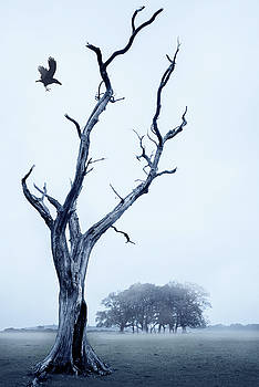 Svetlana Sewell - The Crow