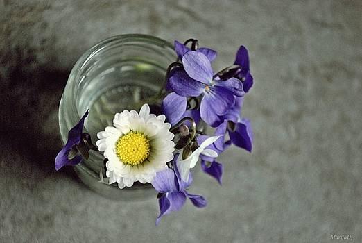 The Daisy by Marija Djedovic