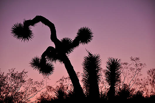 The Dance of the Joshua Tree by Sandy Fisher