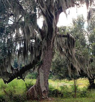 The Dancing Oak  by Debbie May