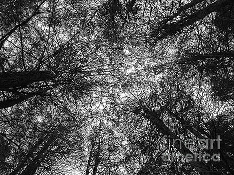 The Dark Forest Path by Katrina Perekrestenko