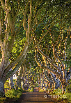 The Dark Hedges by Henk Meijer Photography