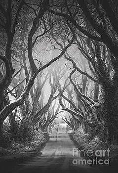 The Dark Hedges by Pawel Klarecki