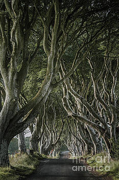 The Dark Hedges V by Pawel Klarecki