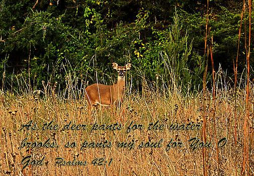 The Deer by Barbara Dean
