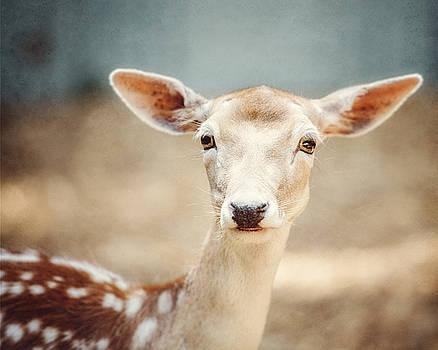 Lisa Russo - The Deer
