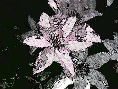 The Delicate Clematis Vine  by Art Speakman