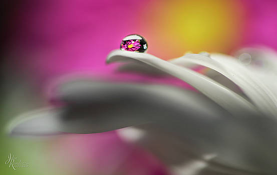 The dew drop by John Randazzo