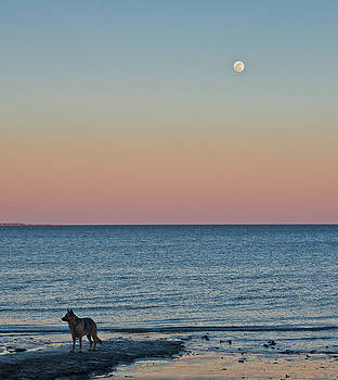 Joshua and the Moon by Sandy Schepis