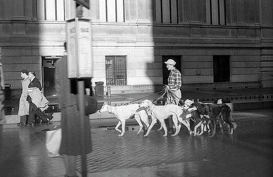 The Dog Walker by Susan Tribuzio