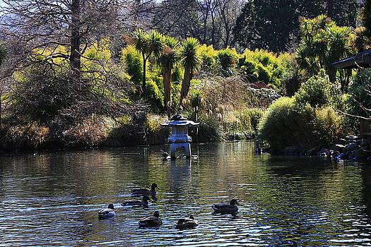The Duckpond by Nareeta Martin