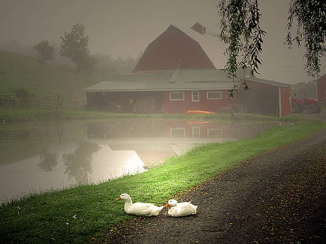 The Ducks In The Morning Fog At Maple Hill Farm by Patricia Keller