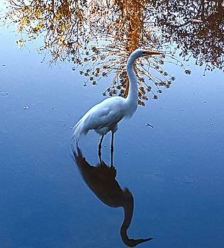 The Egret by Vilma Zurc