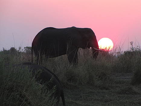 The Elephant and the Sun by David Bader