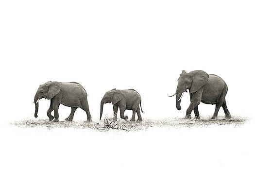 The Elephants by Mario Moreno