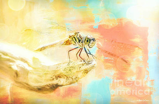 The Ethereal Dragonfly by Tina LeCour
