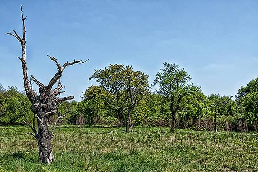 The Ex-Tree by Rabiri Us