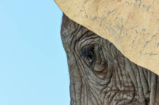 The eye of an elephant by Gaelyn Olmsted