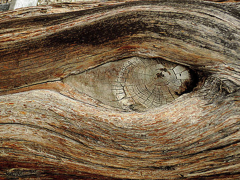 The eye of the tree by Guido Strambio