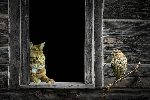 Randall Nyhof - The Eyes are on the Sparrow