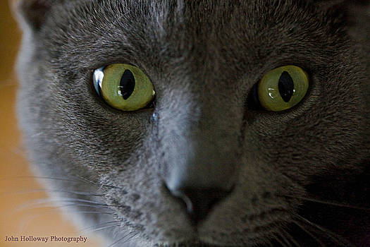 The Eyes Have It by John Holloway