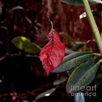 Beatrice Cox - The Fallen Leaf