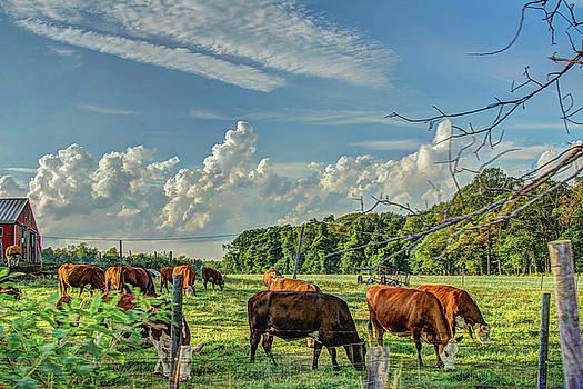 The Farm by Jerri Moon Cantone