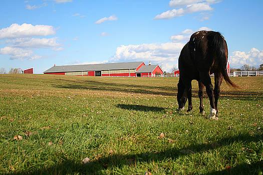 The Farm by Shelly Davis