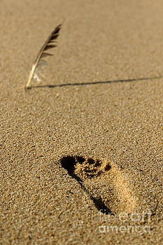 The feather and the footprint by Howard Ferrier