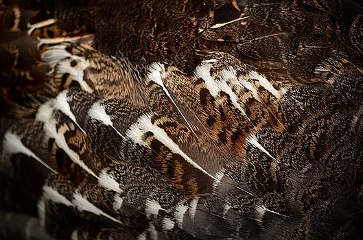 The feathers of a Grouse by Ian Harland