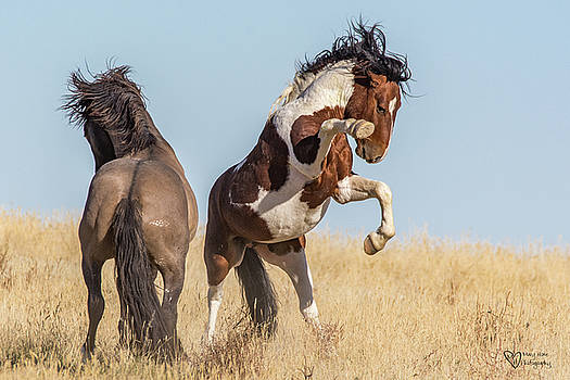 The Fight is On by Mary Hone