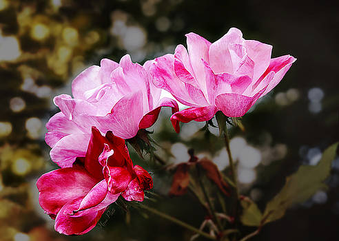 the Final Rose by Nena Pratt