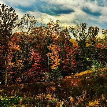 The First Days of Fall by Jennifer Brande